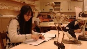 Drawing bird skeletons at the ROM