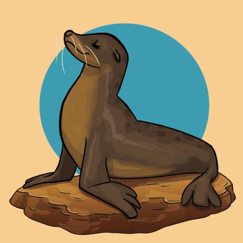 Kylah Heykoop sea_lion