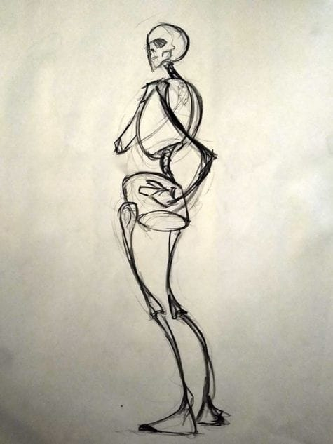 Donna Johnson Anatomy