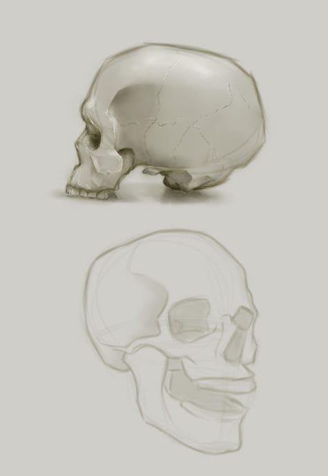 Saffron Thornhill skulls 1