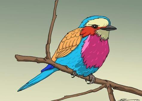 CA3 Edwin Ochanda LILAC BREASTED ROLLER fixed Animal Drawing F19