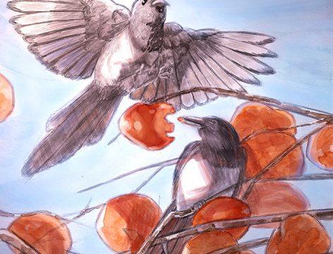 June Yim AP4 Bird Illustration assignment